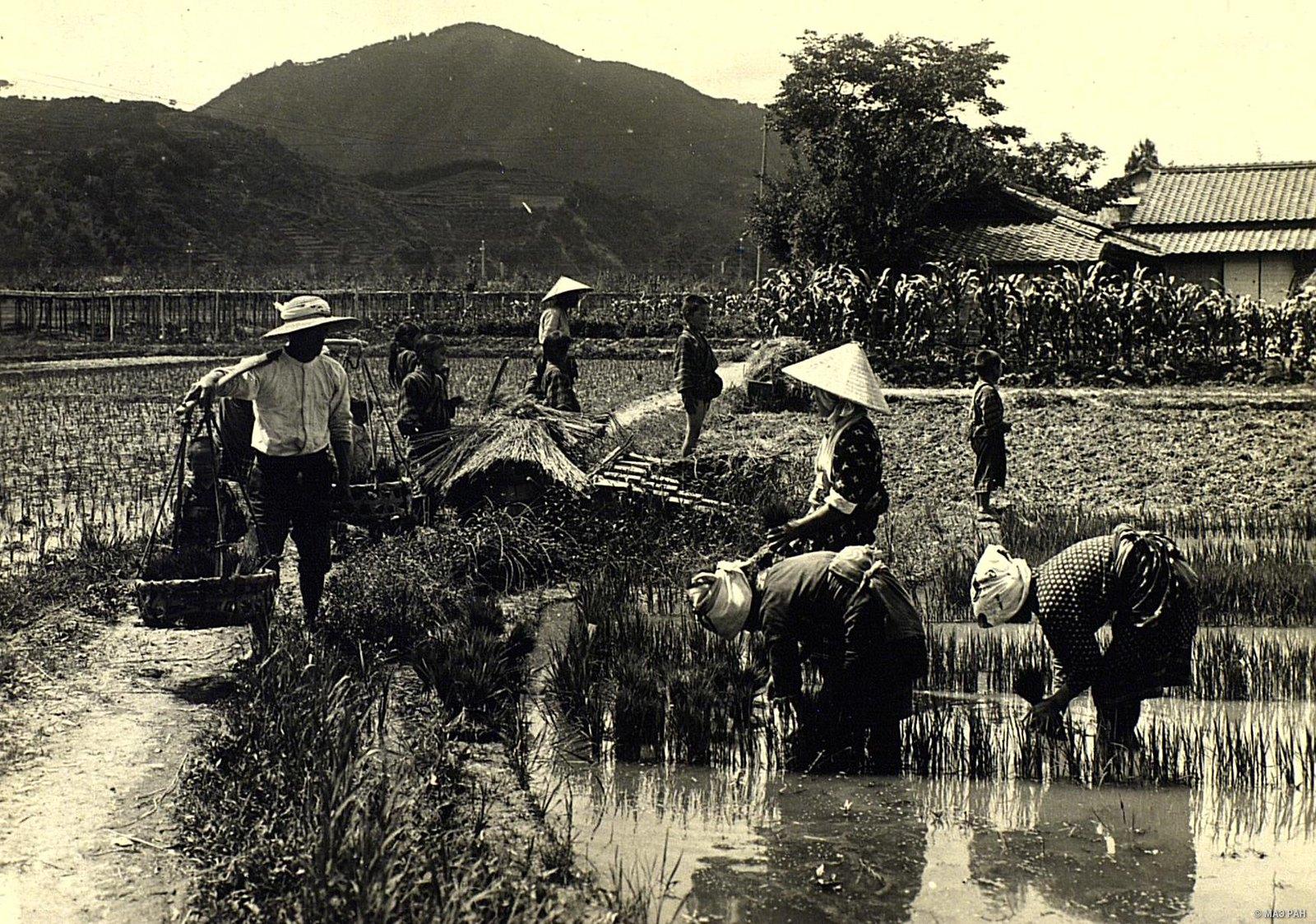 09. Рассадка риса