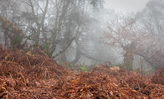 Through The Mist of Time - HSS!