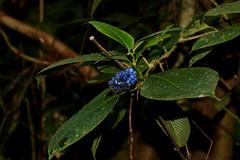 Berries (Rancho Naturalista)