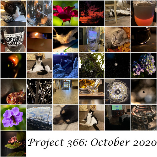 Project 366 October