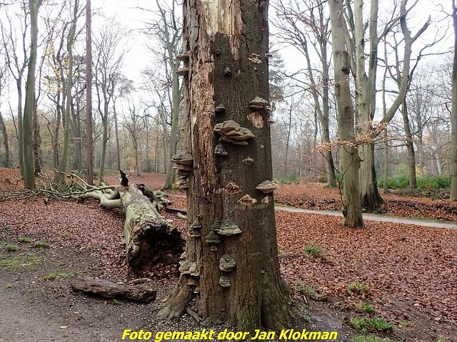 2020-11-28 Het Gooi & Eemland  30 Km (30)