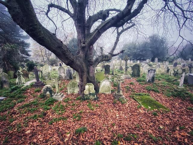Brompton Cemetery morning walk
