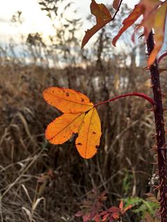 Last flash of autumn colour