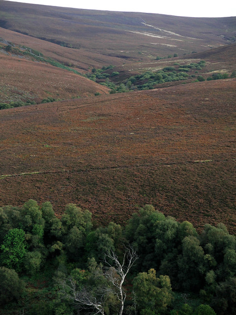 Scottish moorland