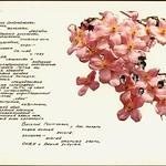 Альбом - ПромСтройПроект - В.Г.Канищеву 024-1 PAPER800 [Violity] [Волок А.М.]