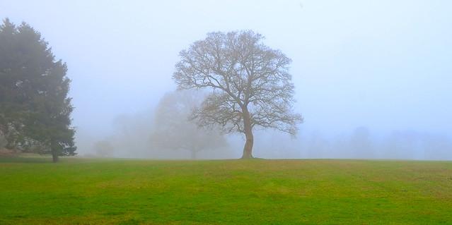 Mist on the Surrey Hills