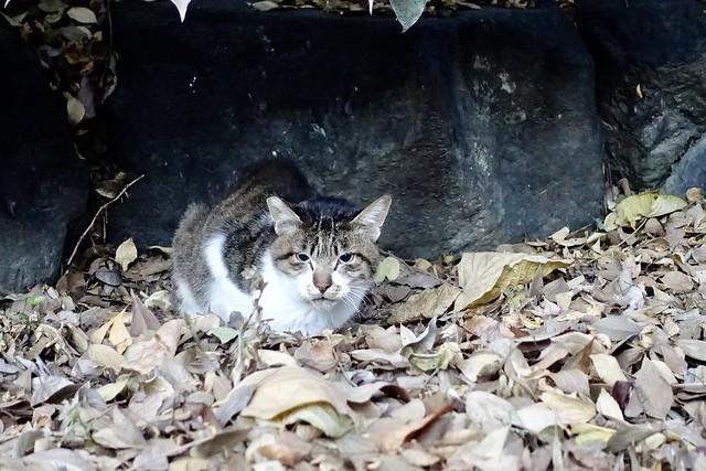 Today's Cat@2020−11−30
