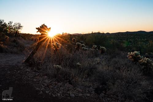 sunrise sonorandesert cactus cacti