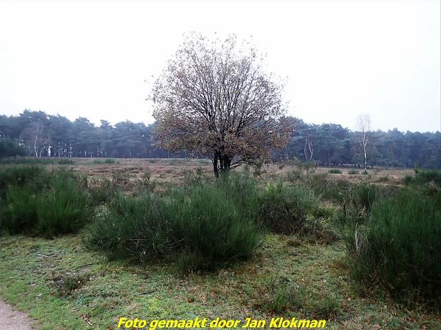 2020-11-28 Het Gooi & Eemland  30 Km (7)