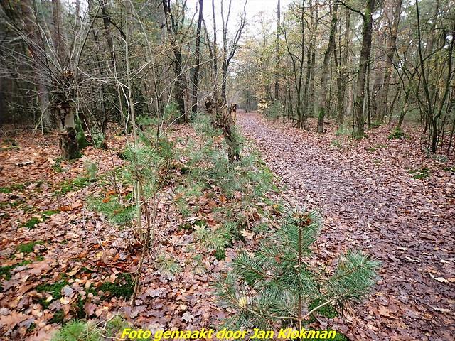 2020-11-28 Het Gooi & Eemland  30 Km (14)