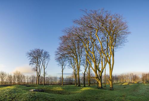 landscape derbyshire peakdistrict whitepeak minninglowhill pikehall goldenhour sunrise trees bronzeagesite neolithicsite chamberedtomb bowlbarrows