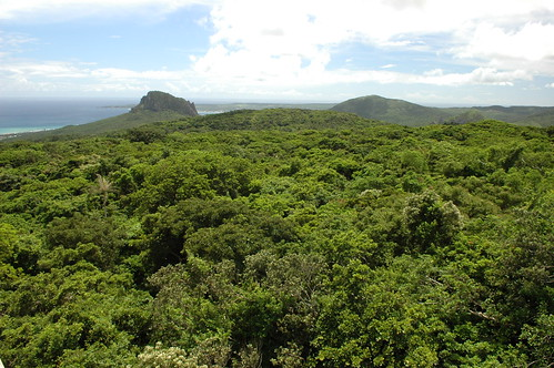 Mon, 06/27/2005 - 13:44 - Canopy of Kenting forest