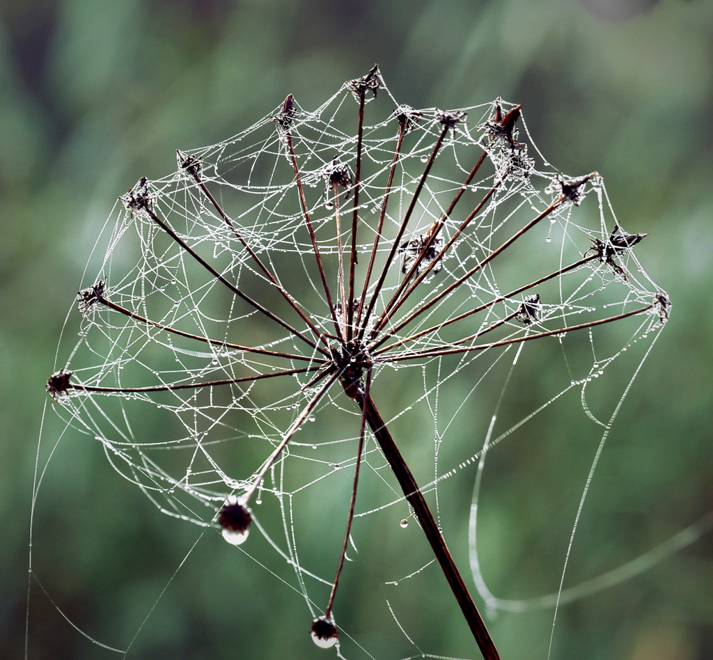 Yet another dewy web