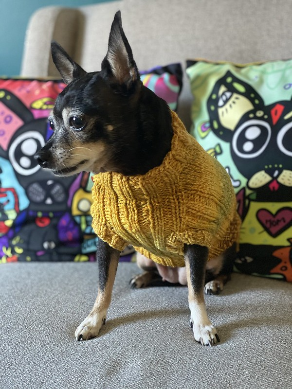 Lucky dog sweater