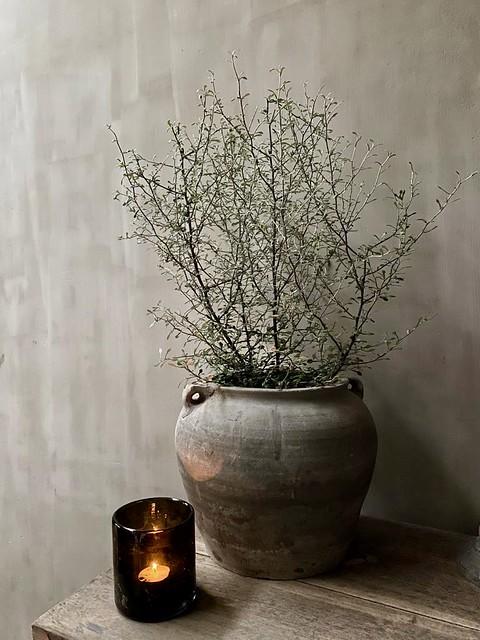 Corokia plantje in sobere pot windlicht DutZ zwart