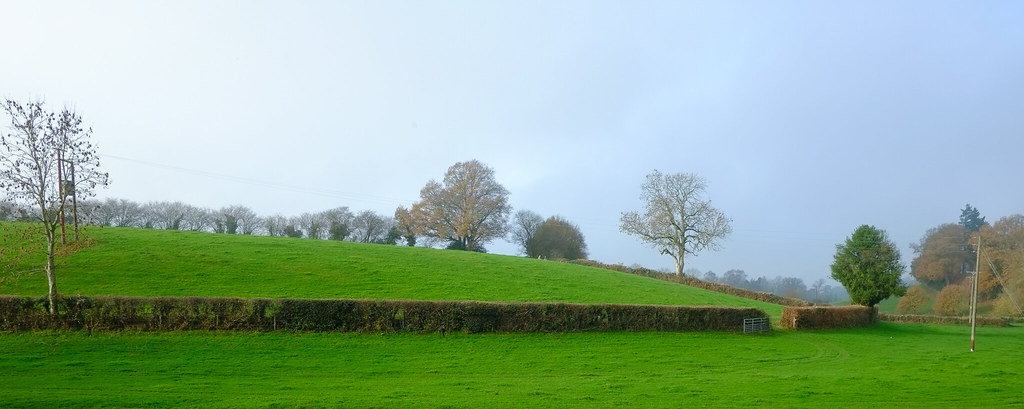 The English Hedgerows..AONB