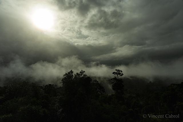 Lever de soleil en canopée sous la brume