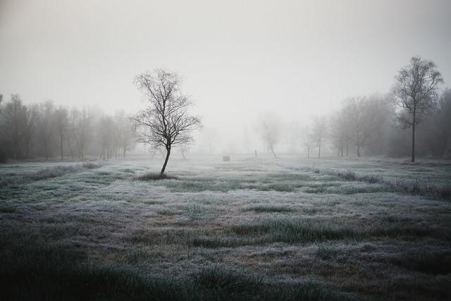 winter    l   2020