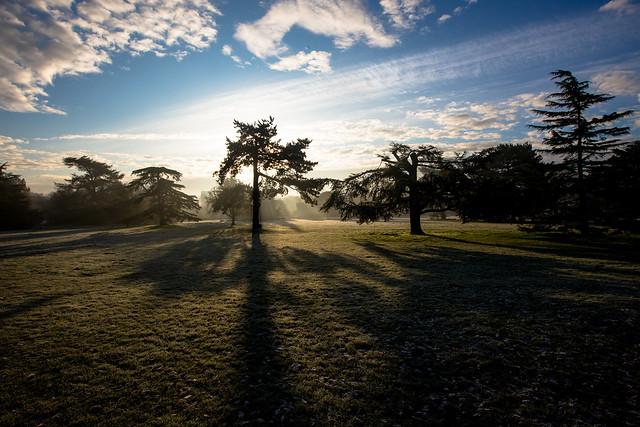 morning frost at gunnersbury park