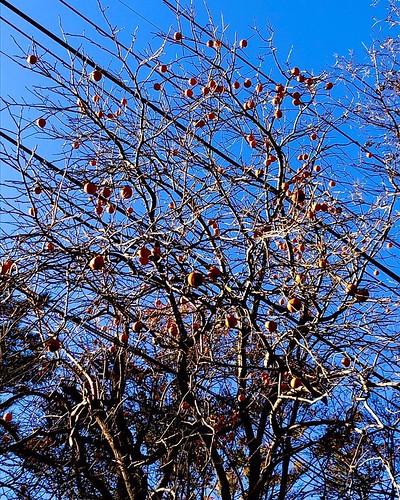 記録と記憶に残り、多くの人の中で節目になりそうな2020年も一瞬で過ぎ去り、残り1ヶ月。 例年やり残したことや今からできることを見直していたような気がするけど、なんだか今年はそういう心残りはさっさと置いて行くほうが良い気がする。 己に収穫せず鳥たちの糧にして、囀りを聴くもまた良し。