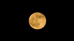 Lúa de Novembro