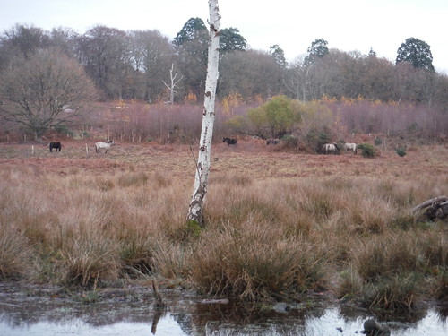 Hothfield Bogs and Ponies SWC Walk 152 - Pluckley to Ashford (Greensand Way Stage 10)