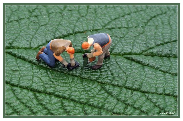 Leaf Texturizers
