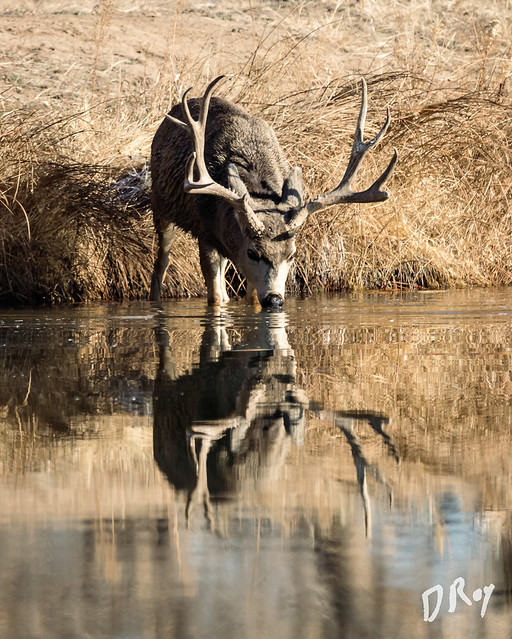 Reflected Buck