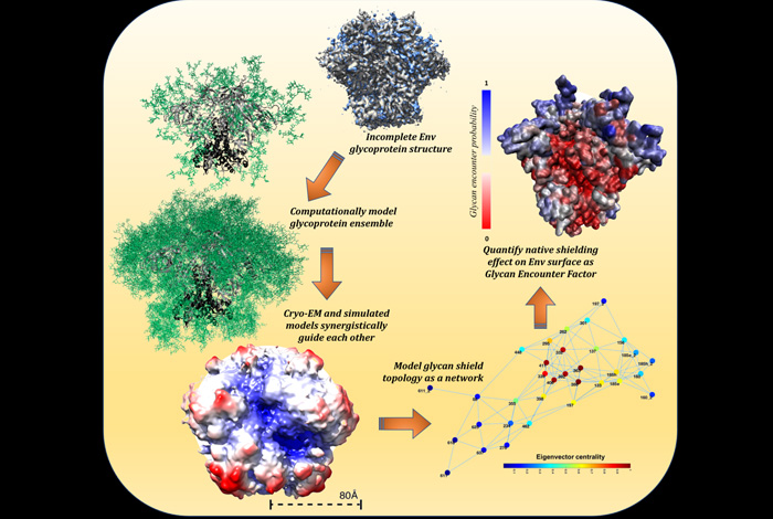 Cryo-electron microscopy experiments and extensive computational modeling synergistically guide detailed mapping of the HIV viral glycan shield.