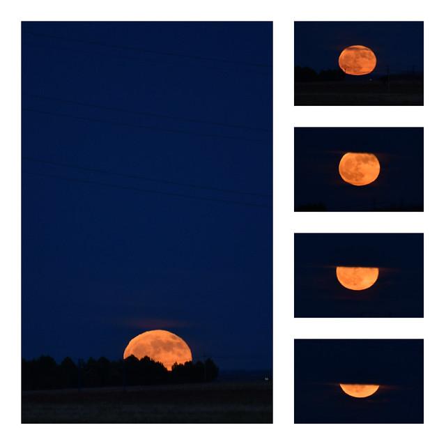 Sé la frase que encanta y que comprende, y sé callar cuando la Luna enorme y roja asciende por los barrancos.