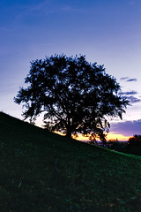 Sunset Tree At The Hill