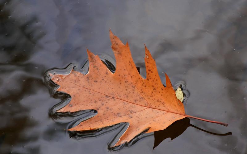Fallen Foliage