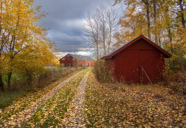 Path of Autumn