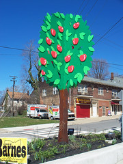 OH Cleveland - Apple Tree