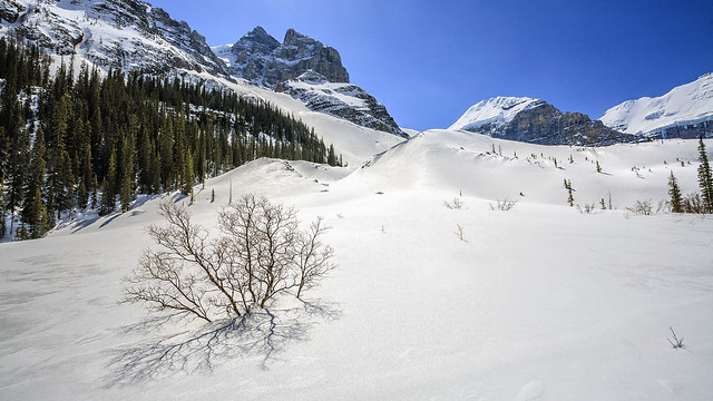 Plain of 6 Glaciers Trail