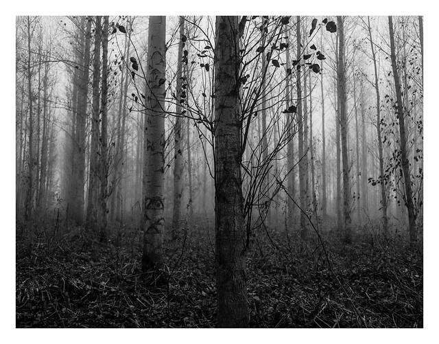 Misty woods #2