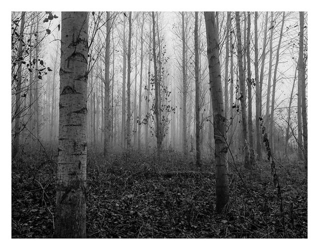 Misty woods #1