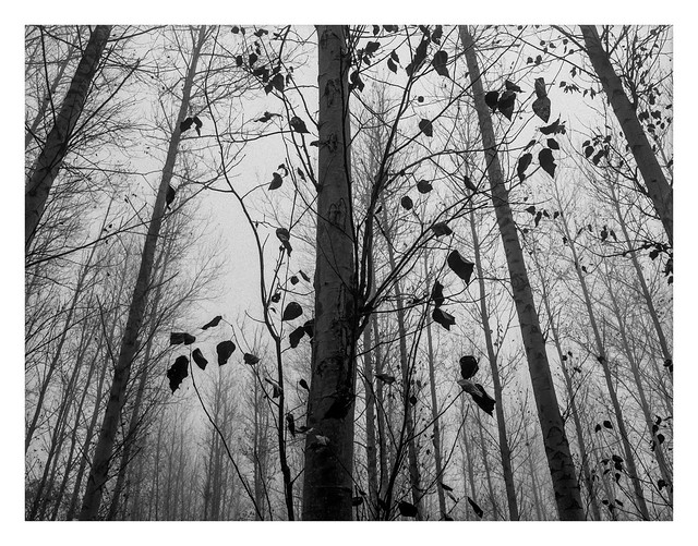 Misty woods #3