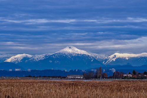 snowonthemountains reifelbirdsanctuary steveston ubc snow ©martinsmith martinsmith saltmarsh nikond500