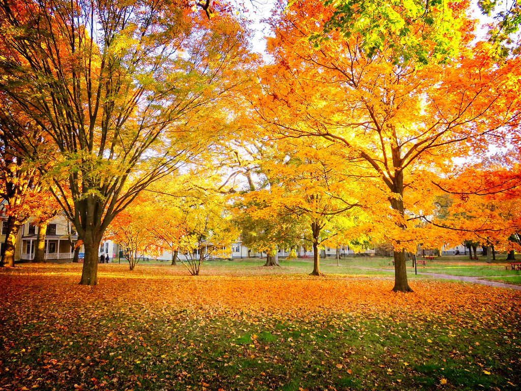 Fall foliage on Governors Island