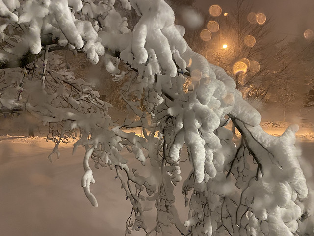 All I can see through a window. #snow