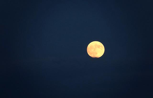 Pleine lune sur fond de ciel d'un bleu profond. Au Québec.  Full yellow moon in a dark blue sky..