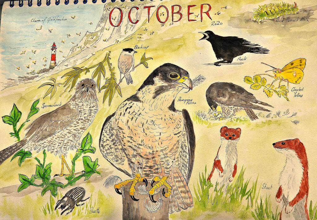Wildlife Sketch October, Nov 10 2020, P1 (4)