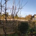 The Garden In Winter 336/366 2020