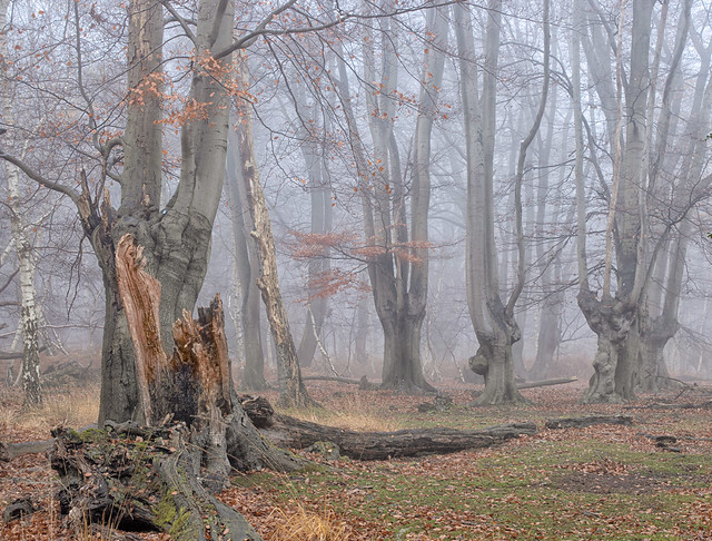 Tree-rot_5398