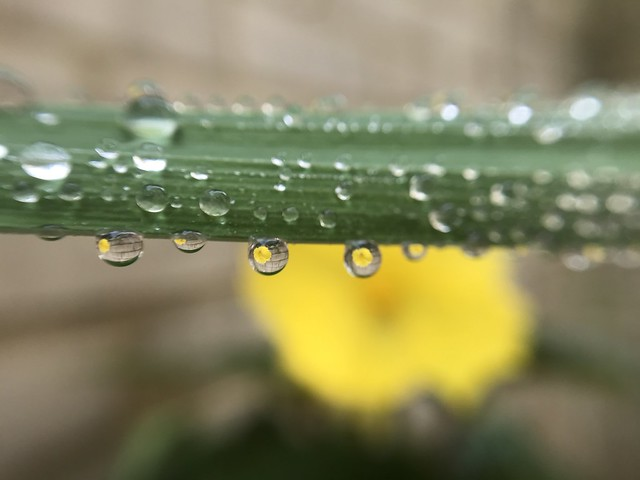 Droplets (iPhone Macro Series)