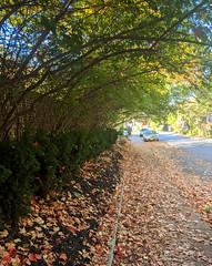 Fall arbour