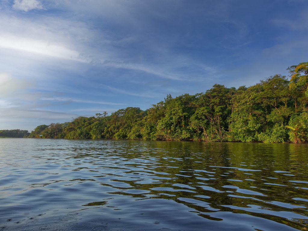 Le matin sur la lagune de Tortuguero... 50668041123_102e7d147c_b