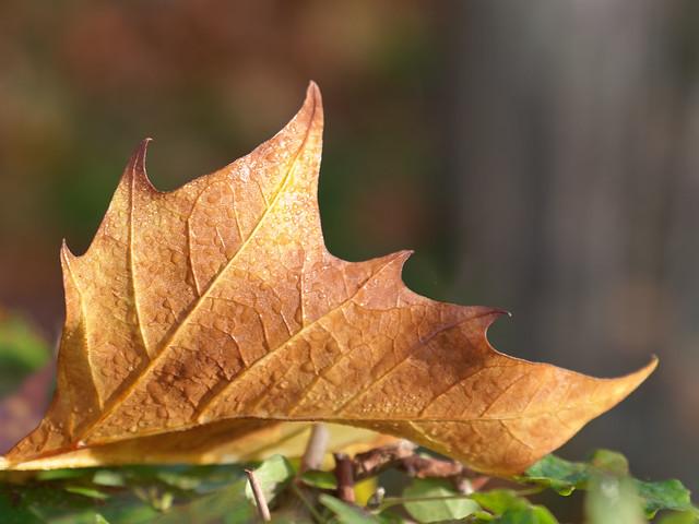 Automne3-autumn3-herfst1-Herbst3-autunno3-otoño3