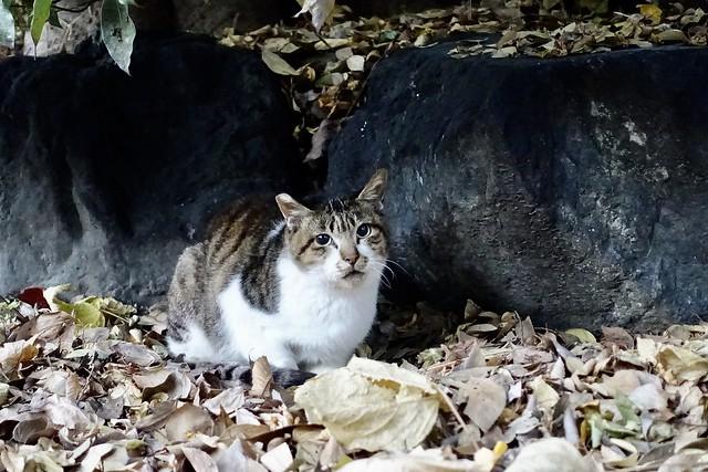 Today's Cat@2020−12−01